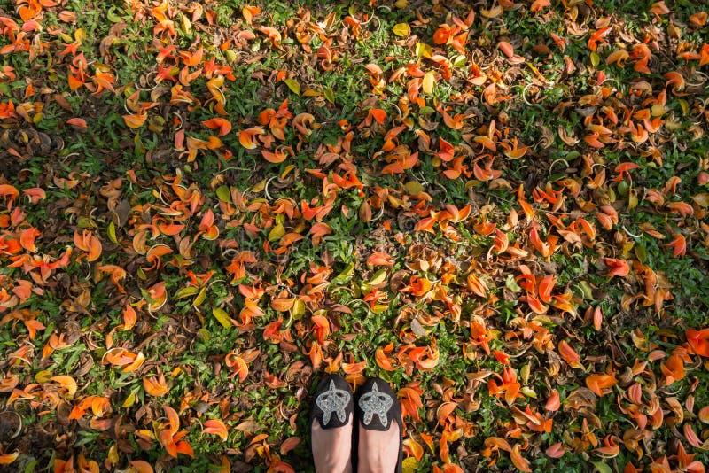 Τοπ όψη Επίπεδα παπούτσια στο νόθο Teak έδαφος στο φως πρωινού στοκ εικόνα