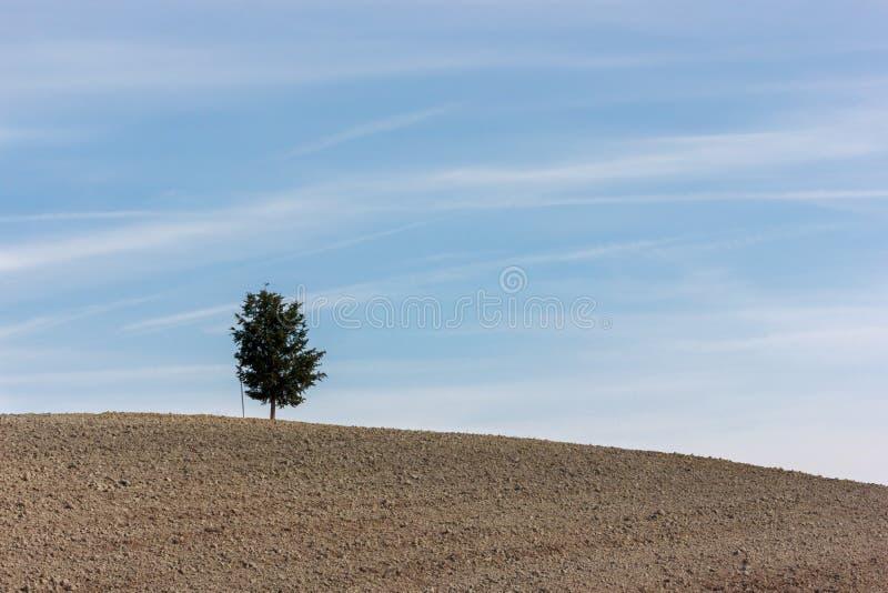 Τοσκάνη - ένα άλλο μόνο δέντρο στοκ φωτογραφίες