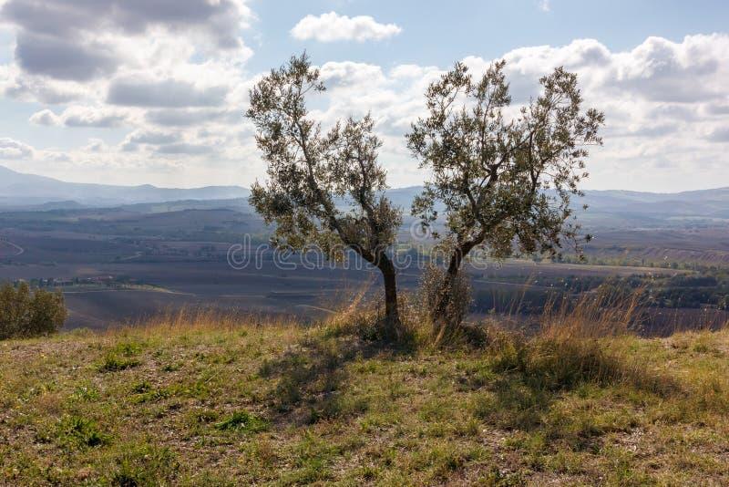 Τοσκάνη - τα δέντρα αδελφών στοκ εικόνα με δικαίωμα ελεύθερης χρήσης