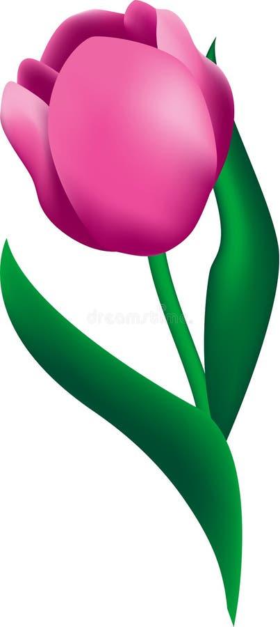 τουλίπα λουλουδιών ελεύθερη απεικόνιση δικαιώματος