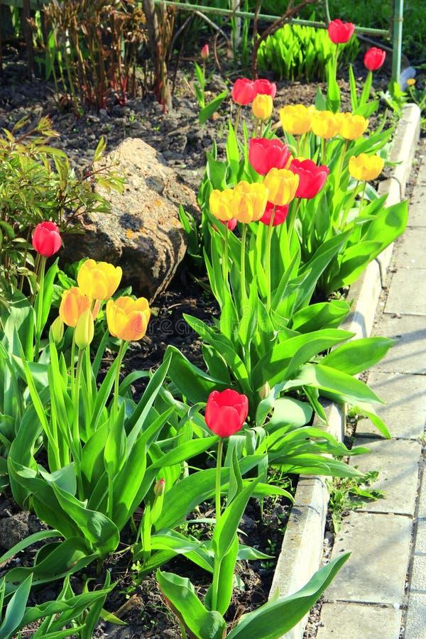 Τουλίπες κίτρινες και κόκκινες στο λουλούδι-κρεβάτι τον Απρίλιο Κήπος άνοιξης υψηλή διάλυση πλοκών σχεδίων τοπίων απεικόνισης σχε στοκ εικόνες