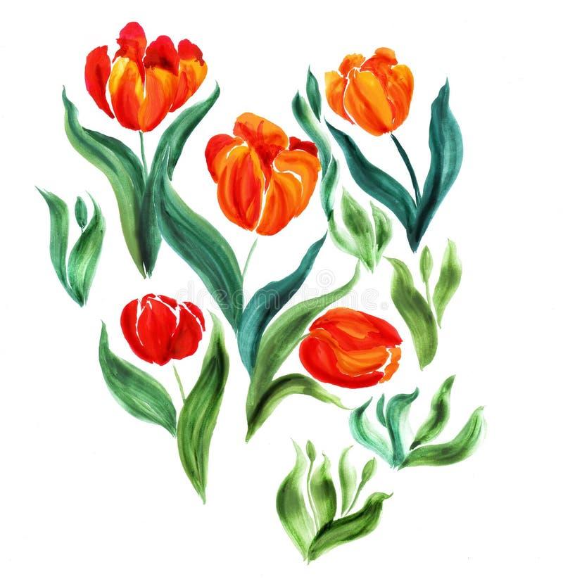 Τουλίπες Λουλούδια, φύλλα, μίσχοι και οφθαλμοί Η χρήση τύπωσε τα υλικά, σημάδια, στοιχεία, ιστοχώροι, χάρτες, αφίσες, κάρτες διανυσματική απεικόνιση