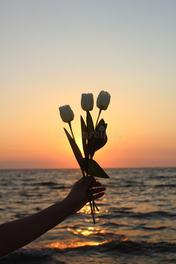 Τουλίπες μιας γυναικείων χεριών εκμετάλλευσης με το όμορφο ηλιοβασίλεμα στοκ εικόνα