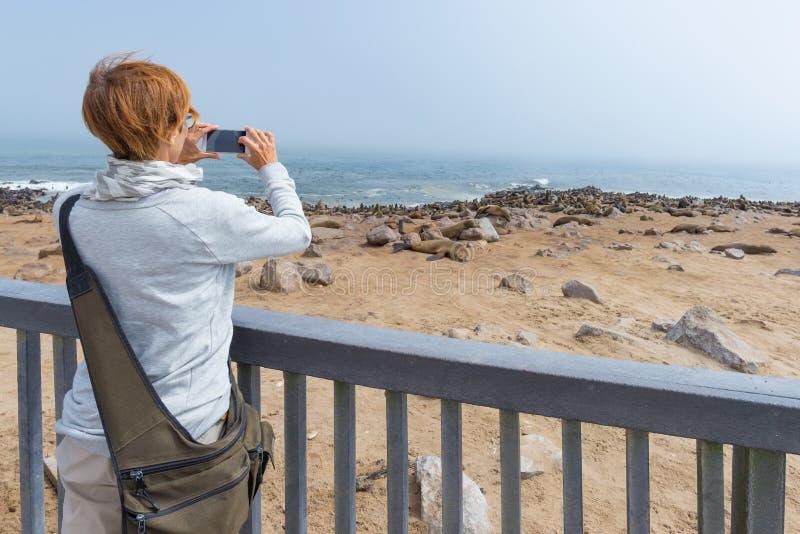 Τουρίστας που φωτογραφίζει την αποικία σφραγίδων στο σταυρό ακρωτηρίων, στην ατλαντική ακτή της Ναμίμπια, Αφρική Εκλεκτική εστίασ στοκ εικόνες με δικαίωμα ελεύθερης χρήσης