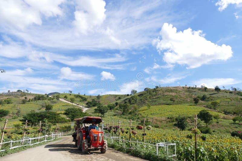Τουρίστας στο ταξίδι δίτροχων χειραμαξών στον τομέα ηλίανθων στο βουνό στοκ φωτογραφίες