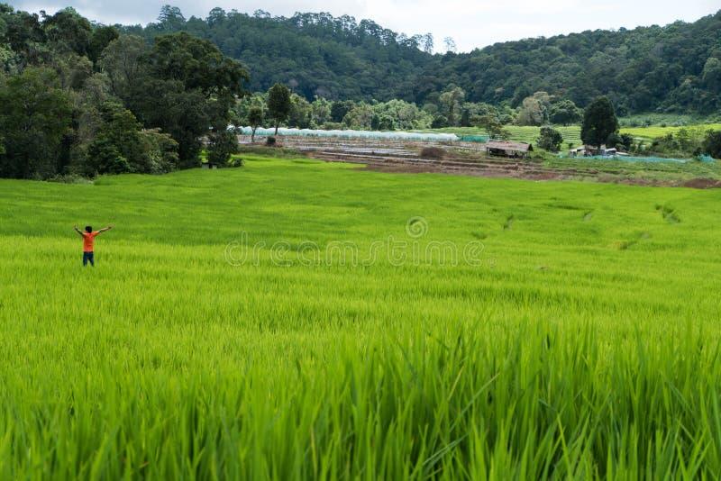 Τουρίστας στο terraced τομέα ρυζιού στο βουνό, PA Pong Piang villag στοκ φωτογραφία με δικαίωμα ελεύθερης χρήσης