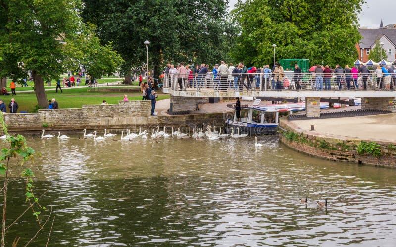 Τουρίστες στη βάρκα που περιβάλλεται από τους κύκνους, Stratford επάνω σε Avon, πόλη του William Shakespeare ` s, Δυτικές Μεσαγγλ στοκ φωτογραφία με δικαίωμα ελεύθερης χρήσης