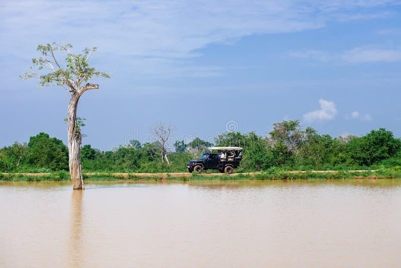 Τουρίστες στο όχημα σαφάρι στο εθνικό πάρκο φύσης Udawalave στοκ φωτογραφία με δικαίωμα ελεύθερης χρήσης