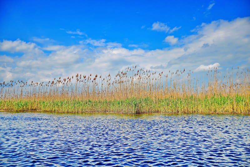 Του δέλτα άποψη καλάμων Δούναβη με το δραματικό ουρανό στοκ φωτογραφία με δικαίωμα ελεύθερης χρήσης