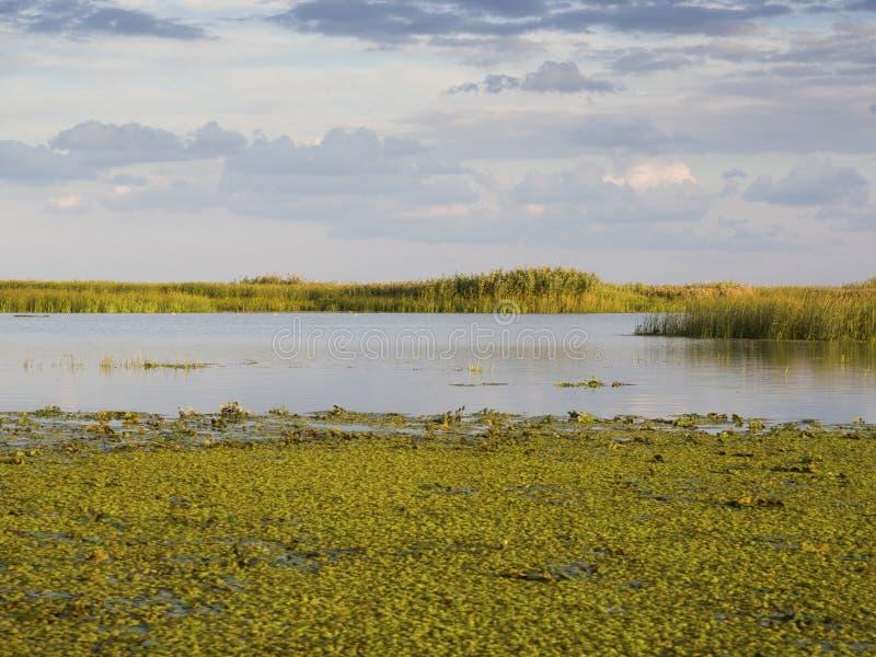Του δέλτα λιμνοθάλασσα Δούναβη στοκ φωτογραφίες με δικαίωμα ελεύθερης χρήσης