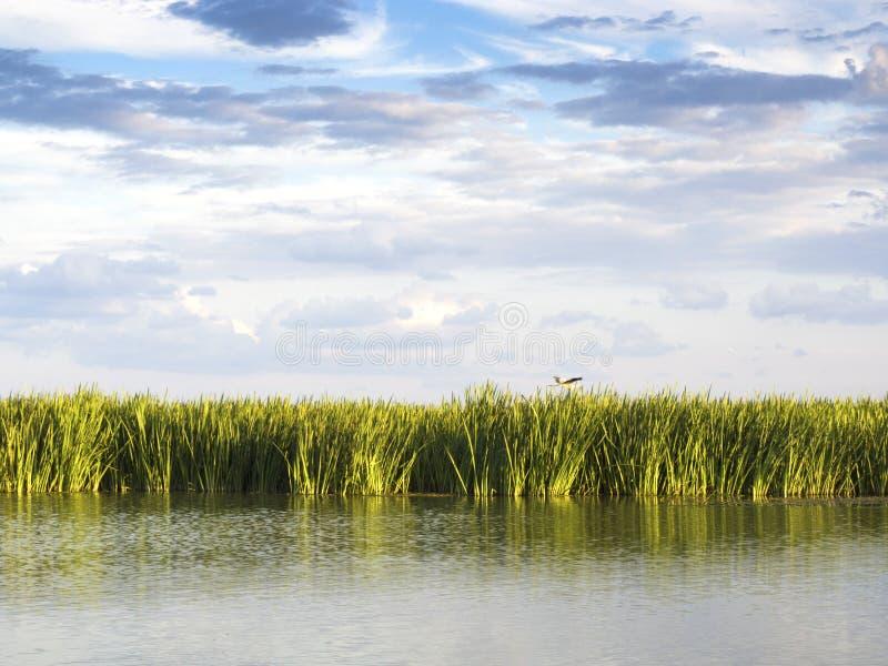 Του δέλτα λιμνοθάλασσα Δούναβη στοκ εικόνα