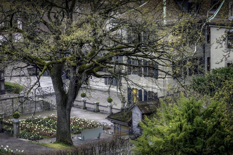 τουλίπα κήπων στοκ εικόνα με δικαίωμα ελεύθερης χρήσης
