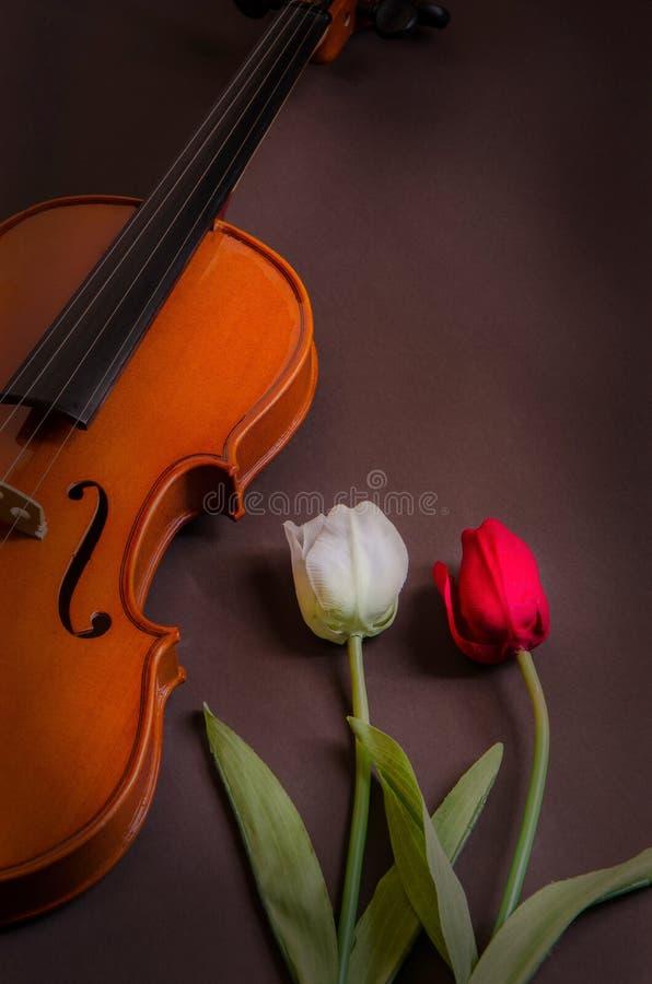 Τουλίπες και βιολί στοκ εικόνες