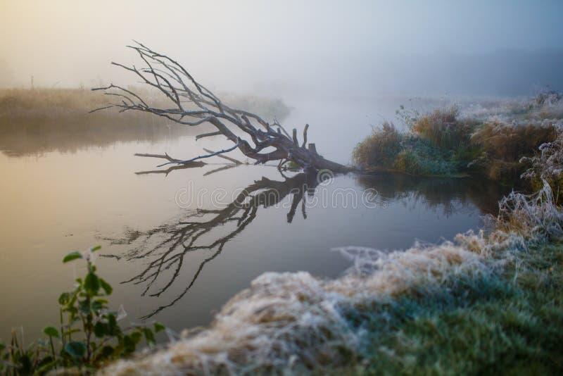 του 2009 βαρκών πρώιμη ομιχλώδης ανατολή άνοιξη της Ρωσίας λιμνών φωτογραφισμένη πρωί Χλόη που καλύπτεται στο hoarfrost το φθινόπ στοκ εικόνα με δικαίωμα ελεύθερης χρήσης