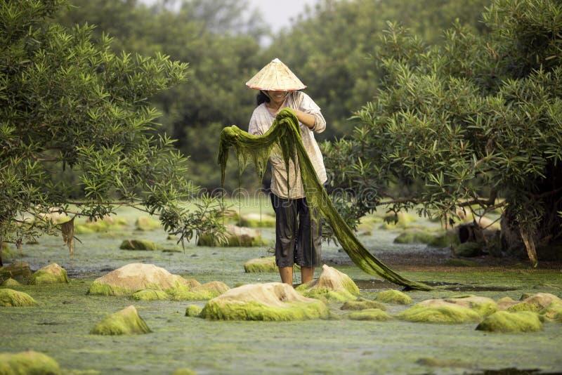 Του γλυκού νερού χωρικοί ή ψαράδες αλγών στο ποταμό Μεκόνγκ στοκ εικόνες με δικαίωμα ελεύθερης χρήσης