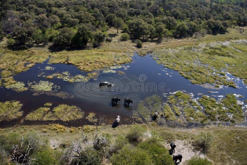 του δέλτα okavango ελεφάντων της Μποτσουάνα στοκ εικόνα με δικαίωμα ελεύθερης χρήσης