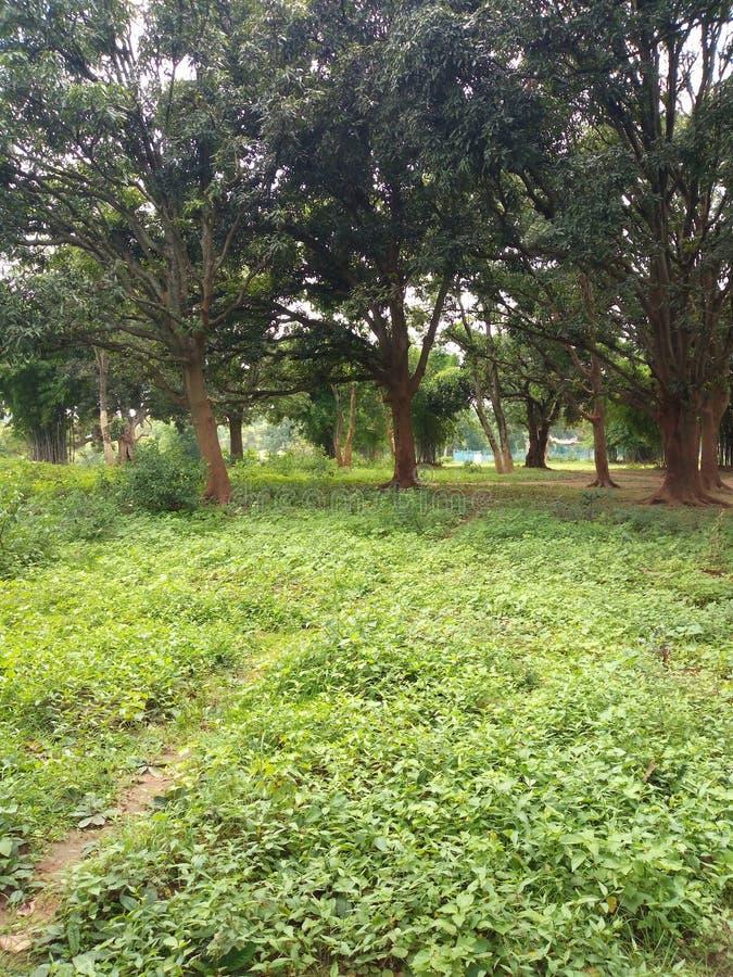 Του χωριού κήπος και πράσινο έδαφος στοκ φωτογραφίες με δικαίωμα ελεύθερης χρήσης