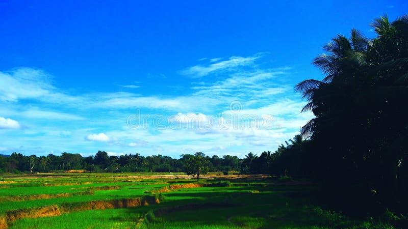 Του χωριού ομορφιά της Σρι Λάνκα στοκ εικόνες