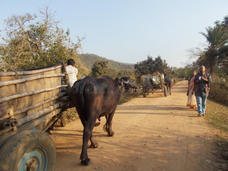 Του χωριού δρόμος στοκ εικόνα