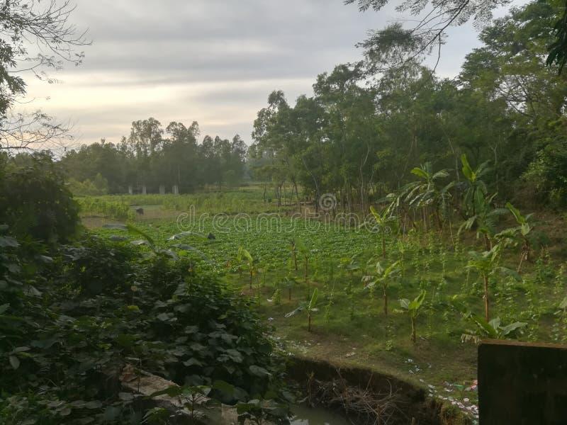 Του χωριού τομέας στοκ εικόνες με δικαίωμα ελεύθερης χρήσης