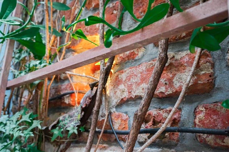 Τούβλα με την πρασινάδα και την ξύλινη διαμόρφωση στοκ εικόνες