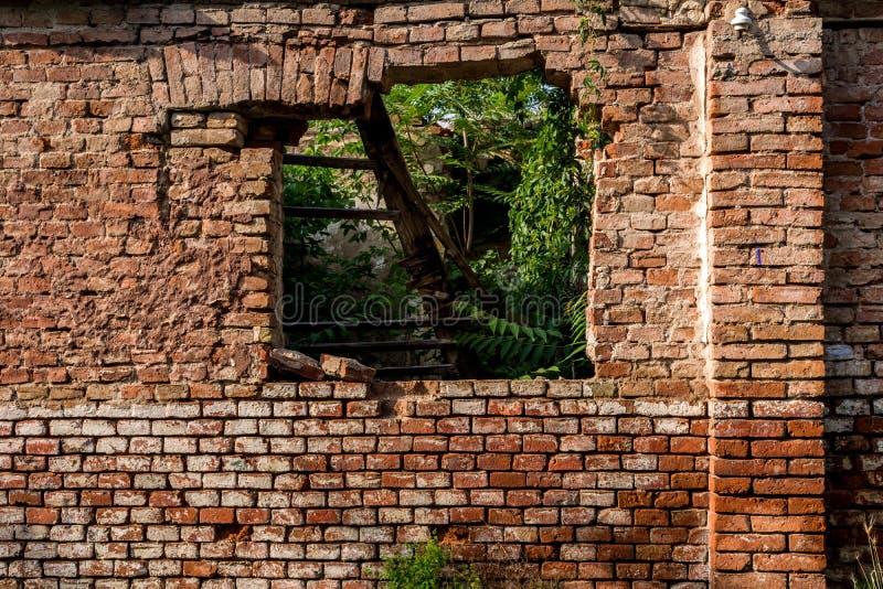 Τούβλινος τοίχος με το παράθυρο και τις καταστροφές και τις πράσινες εγκαταστάσεις και χαλασμένη στέγη μέσα στο σπίτι στοκ εικόνες