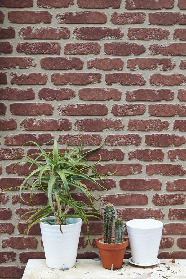 Τούβλινο υπόβαθρο τοίχων με τον κάκτο στοκ εικόνες με δικαίωμα ελεύθερης χρήσης