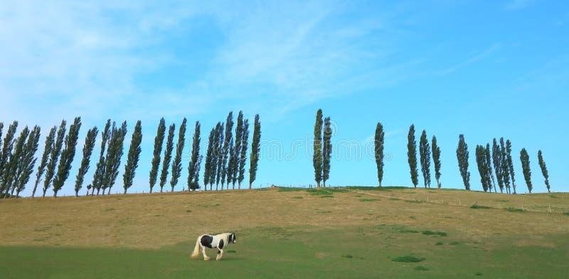 Το άλογο βόσκει στο καλλιεργήσιμο έδαφος στοκ εικόνες