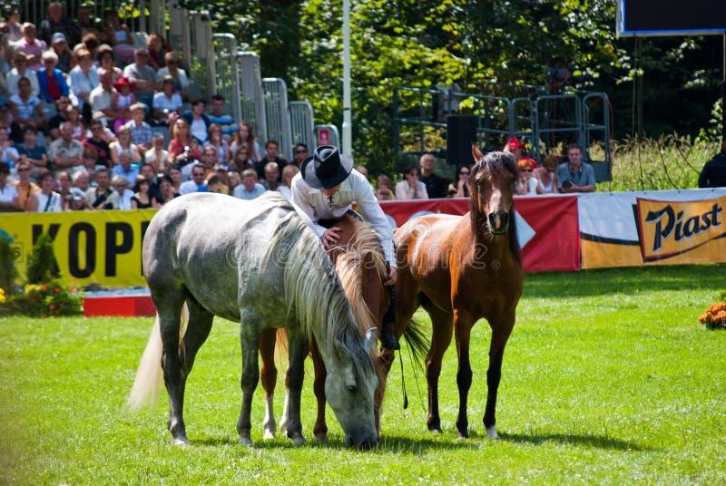 το άλογο εμφανίζει whisperer στοκ εικόνες