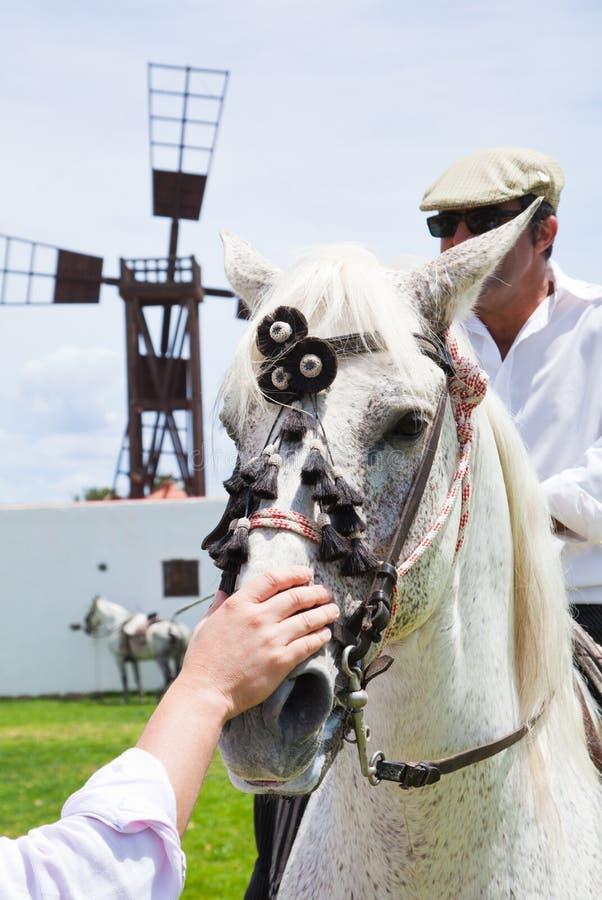 Το άλογο corralejo 28 Απριλίου εμφανίζει Ισπανία στοκ φωτογραφία