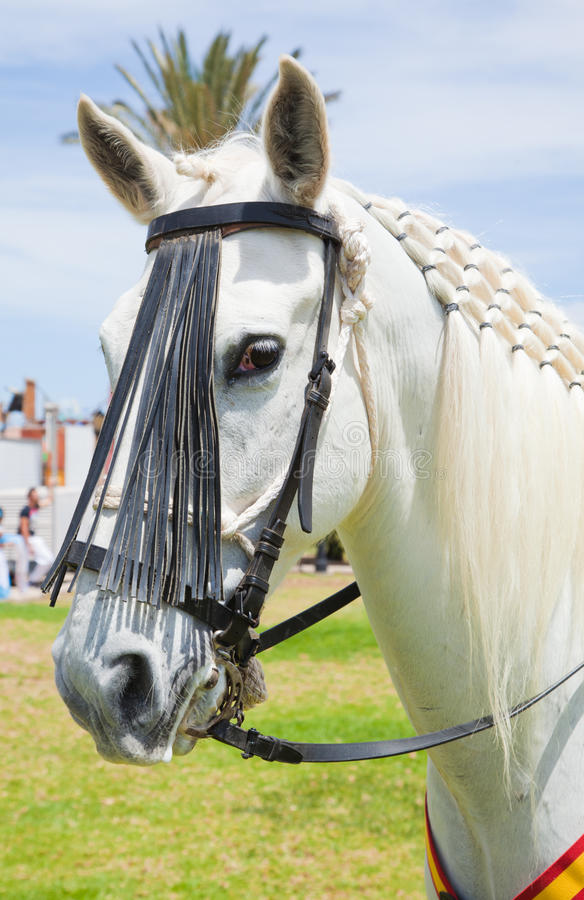 Το άλογο corralejo 28 Απριλίου εμφανίζει Ισπανία στοκ φωτογραφία με δικαίωμα ελεύθερης χρήσης