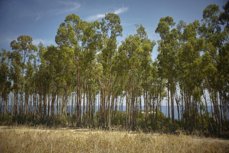 Το άλσος λευκών κατά μήκος της νότιας παράλιας της Σαρδηνίας στοκ εικόνες