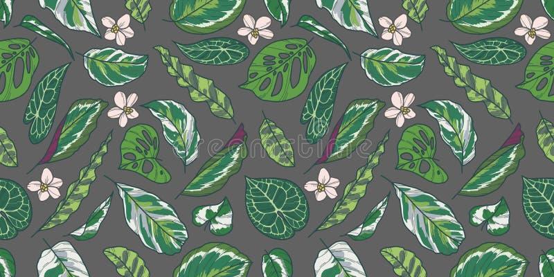Το άνευ ραφής σχέδιο με εξωτικό Calathea, Pothos και Monstera τα φύλλα και τα λουλούδια στο γκρίζο υπόβαθρο ελεύθερη απεικόνιση δικαιώματος