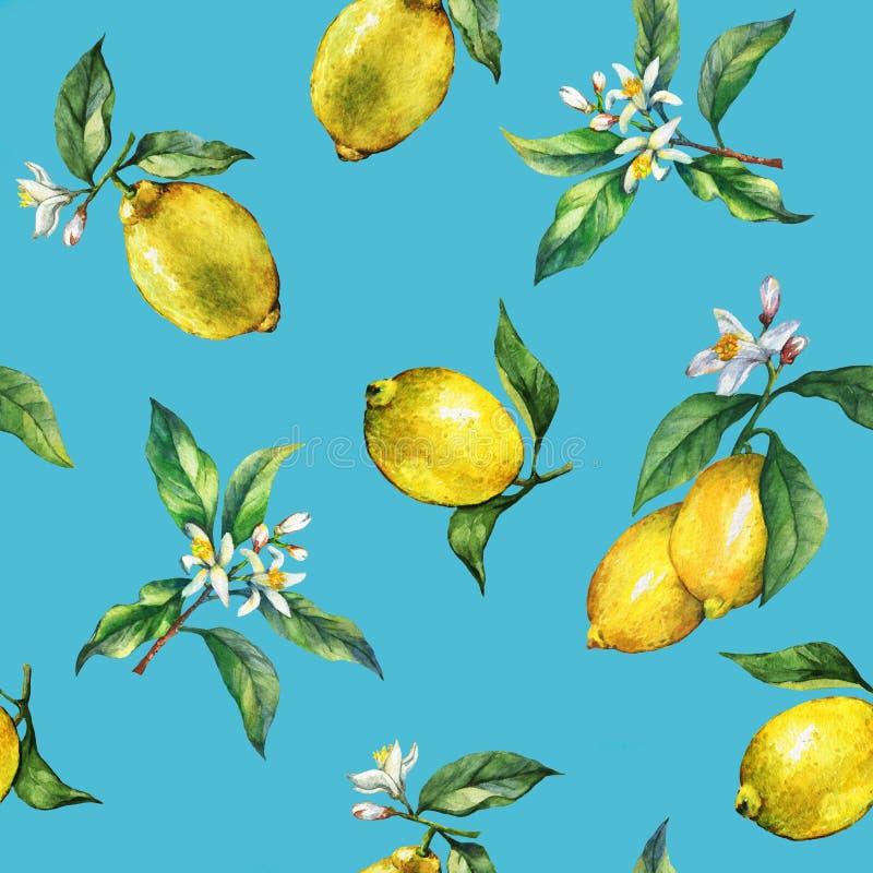 Το άνευ ραφής σχέδιο των κλάδων των φρέσκων λεμονιών εσπεριδοειδούς με τα πράσινα φύλλα και τα λουλούδια διανυσματική απεικόνιση