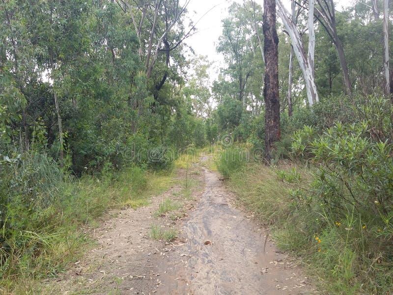 Το δάσος ένα Σάββατο πρωί στοκ εικόνες με δικαίωμα ελεύθερης χρήσης