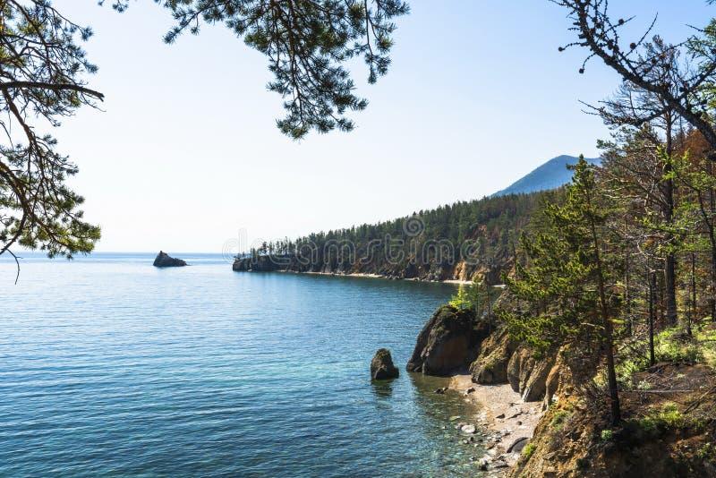 Το δάσος στην ακτή της λίμνης στοκ φωτογραφίες με δικαίωμα ελεύθερης χρήσης