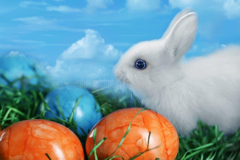 Το άσπρο γούνινο κουνέλι τρώει τη χλόη δίπλα στα πολύχρωμα αυγά Πάσχας, στοκ εικόνες