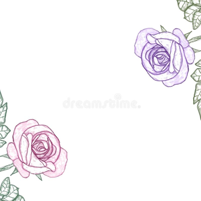 Το άσπρο υπόβαθρο με το watercolor αυξήθηκε στοκ εικόνες με δικαίωμα ελεύθερης χρήσης