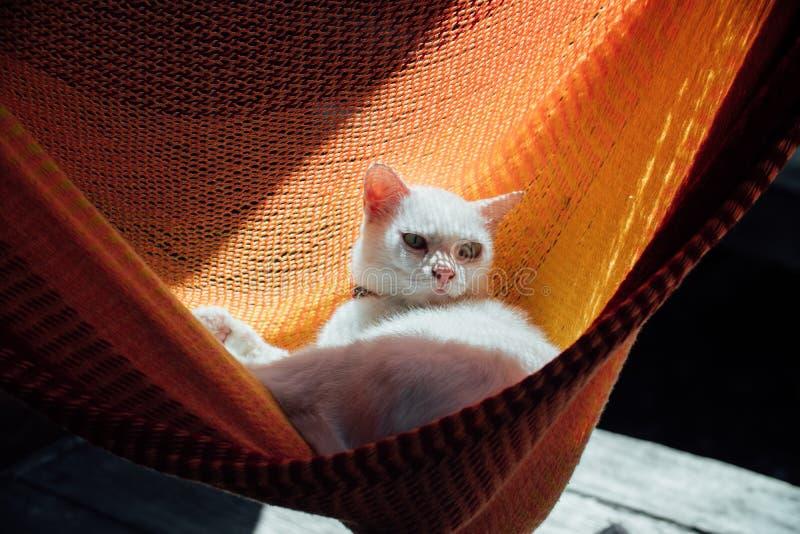 Το άσπρο υπόλοιπο γατών σε μια πορτοκαλιά αιώρα στοκ εικόνες με δικαίωμα ελεύθερης χρήσης