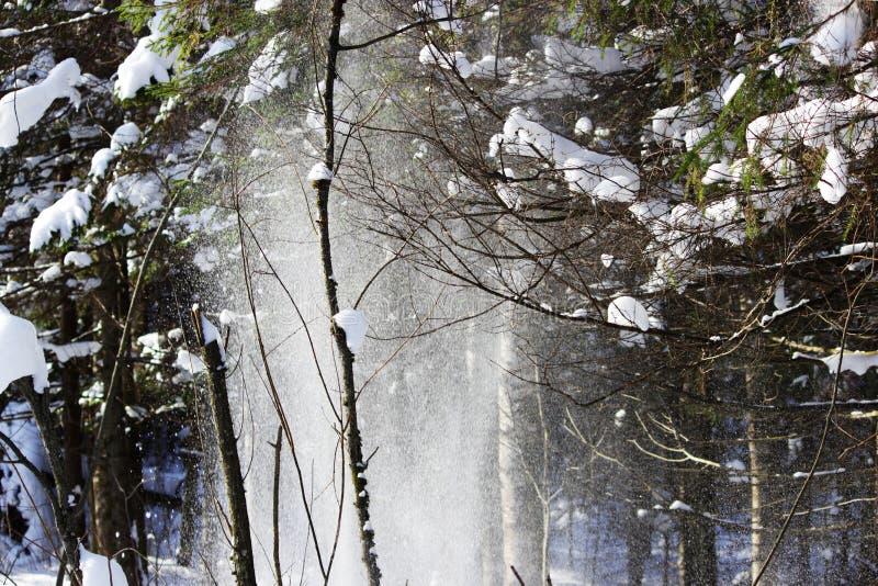 Το άσπρο χιόνι πέφτει από το δέντρο με έναν κλαδίσκο στο δάσος από τον αέρα μετά από τις χιονοπτώσεις την προηγούμενη μέρα μοιάζε στοκ εικόνες