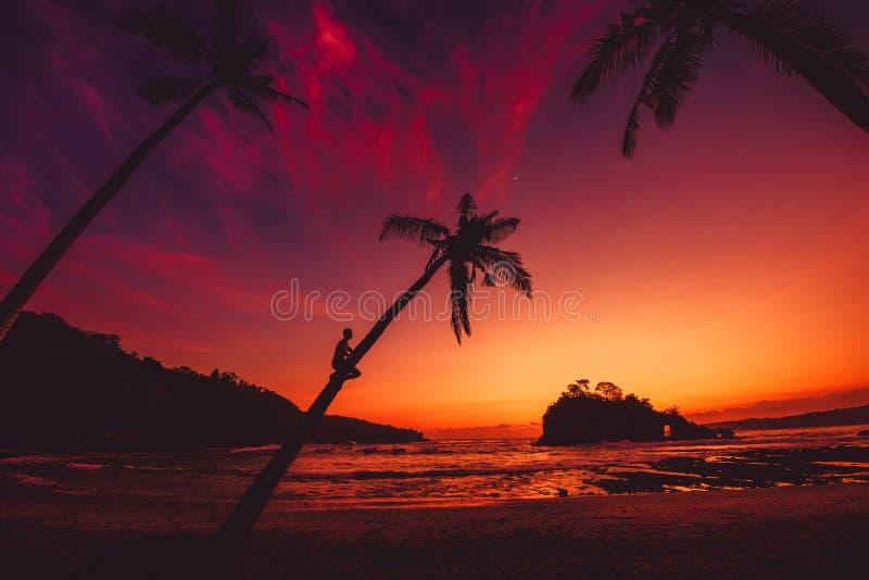 Το άτομο κάθεται στο φοίνικα καρύδων και το φωτεινή ηλιοβασίλεμα ή την ανατολή στην τροπική παραλία με τον ωκεανό στοκ εικόνες