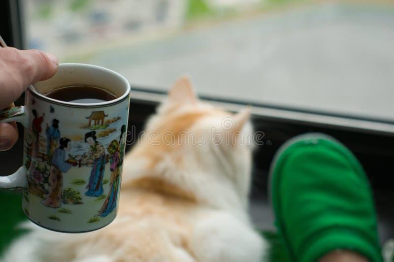Το άτομο και η γάτα του cit στο μπαλκόνι και εξετάζουν το παράθυρο στοκ εικόνες