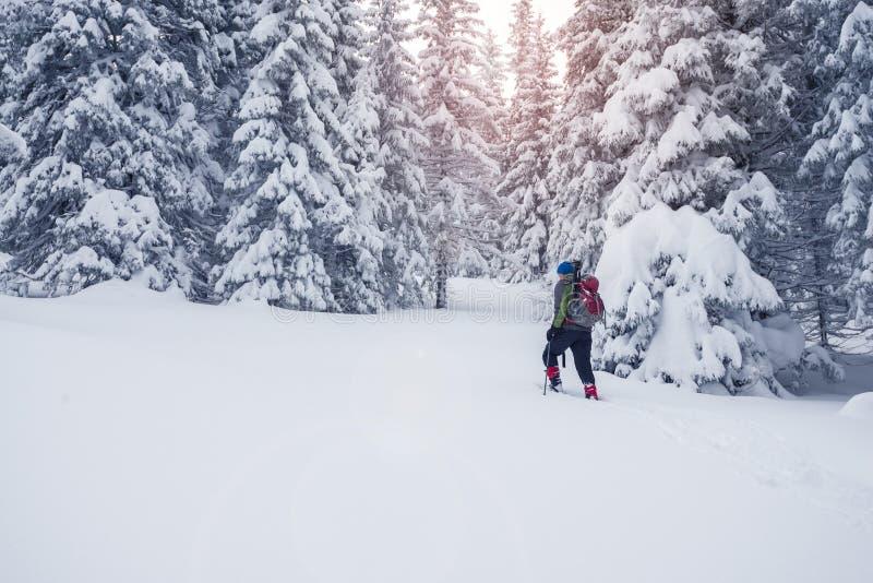 Το άτομο με το σακίδιο πλάτης πηγαίνει πέρα από το κωνοφόρο δάσος μετά από τη θύελλα χιονιού στοκ εικόνα