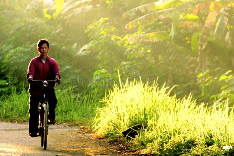 Το άτομο οδηγά το ποδήλατο το πρωί μέσω της ακτίνας του φωτός στοκ εικόνα