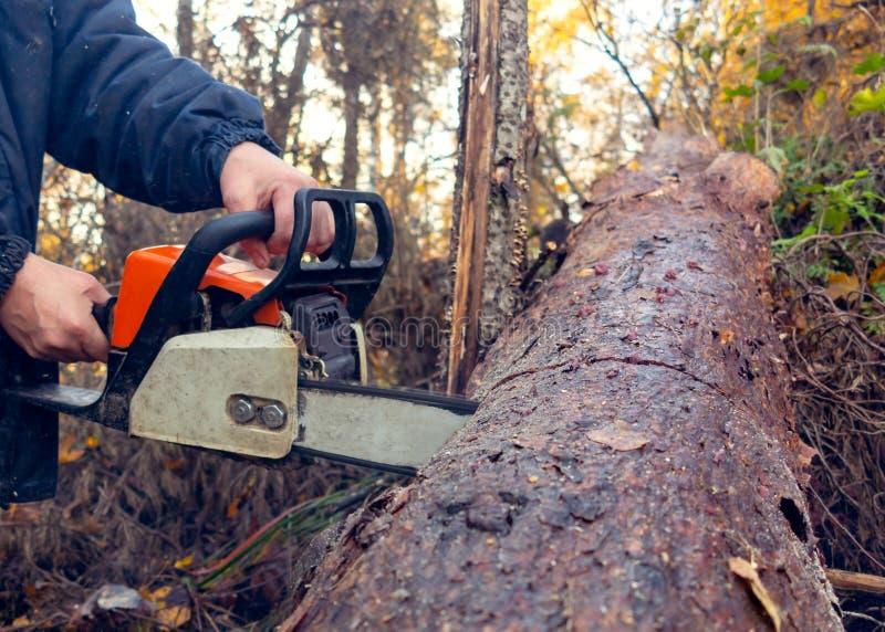Το άτομο πριονίζει μια παχιά σύνδεση αλυσιδοπριόνων το δάσος στοκ εικόνες