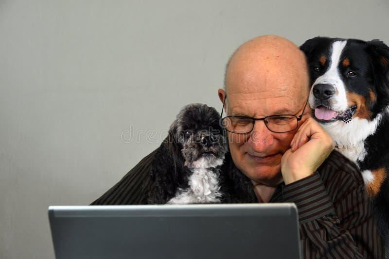 Το άτομο προσπαθεί να εργαστεί, τα σκυλιά του τον κρατούν επιχείρηση στοκ εικόνες