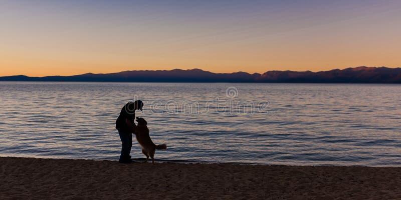 Το άτομο χαιρετά το σκυλί στην παραλία στοκ εικόνες