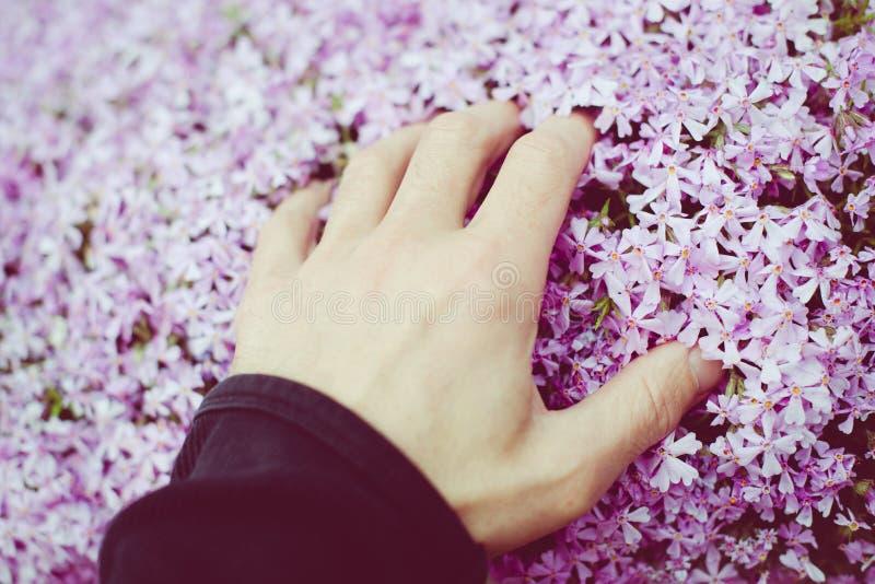 το άτομο χαϊδεύει τα μικρά λουλούδια με το χέρι του στοκ εικόνα