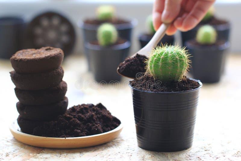 Το έδαφος καφέ, υπόλειμμα καφέ εφαρμόζεται στο δέντρο και είναι ένα φυσικό λίπασμα, χόμπι κηπουρικής στοκ φωτογραφίες με δικαίωμα ελεύθερης χρήσης