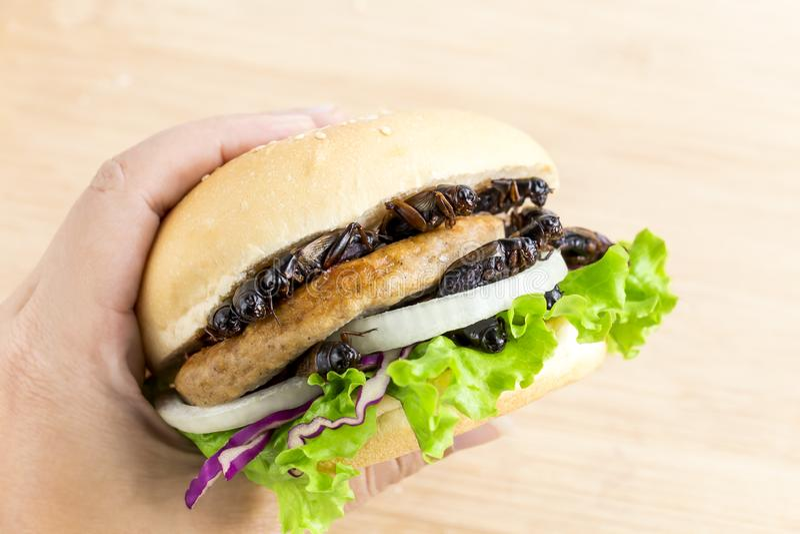 Το έντομο γρύλων για την κατανάλωση ως προϊόντα burger ψωμιού με το λαχανικό φιαγμένα από τηγανισμένο κρέας εντόμων στα χέρια γυν στοκ φωτογραφία με δικαίωμα ελεύθερης χρήσης